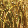A Fresh Taste of Growth for Malternatives